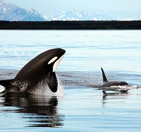 Whales in Kenai Fjords National Park